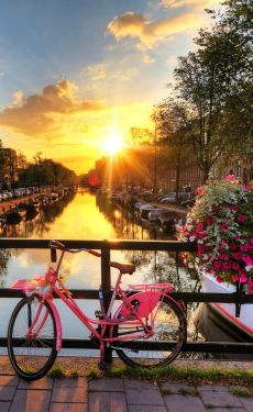 canal pink bike