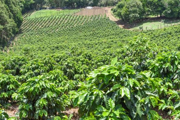 naranjo-coffee-10-1000x666