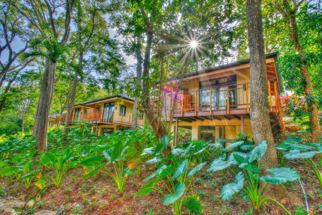 tree-house-glows